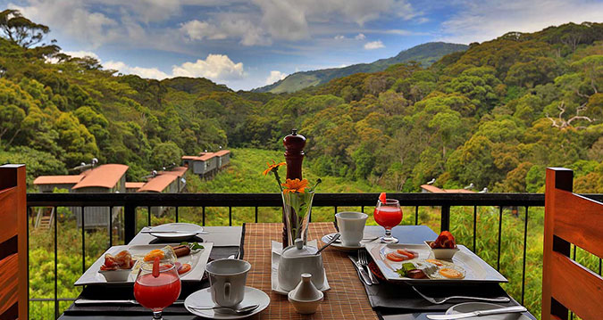 the-rainforest-ecolodge-dine